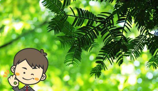 エバーフレッシュの育て方&風水情報。観葉植物と風水の専門家が解説!