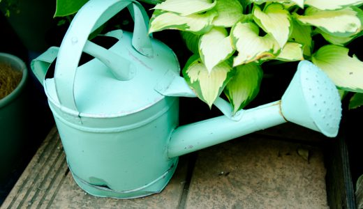観葉植物の水管理