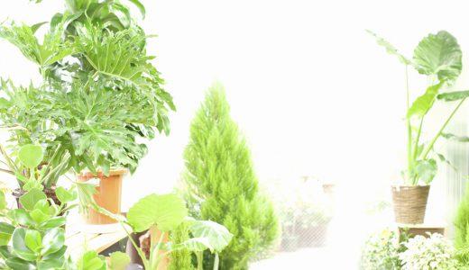 観葉植物の基礎