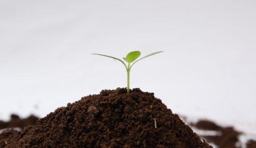 観葉植物の上手な肥料の与え方