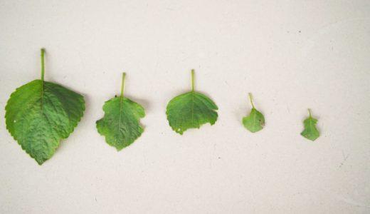 病気や虫から観葉植物を守りましょう
