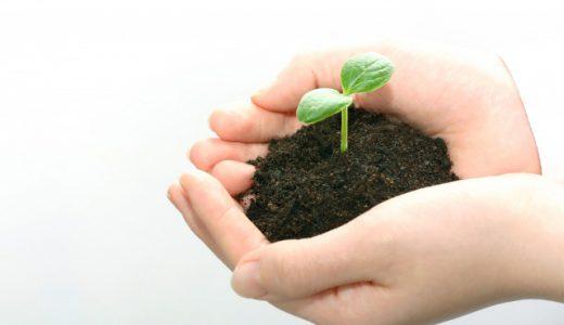 観葉植物に適した土の選び方