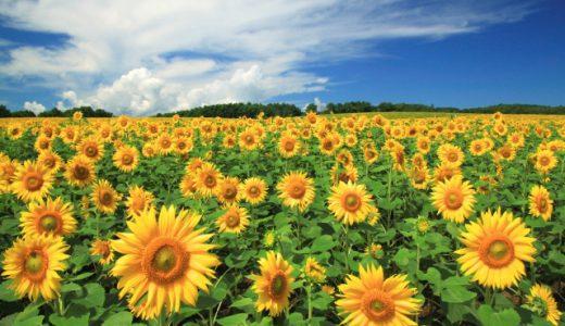 観葉植物の夏の管理と夏にオススメ観葉植物