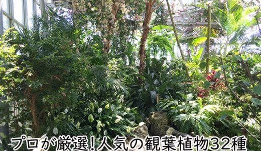 プロが厳選!人気の観葉植物32種【育て方・楽しみ方・風水情報】