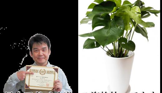 簡単風水術!観葉植物【モンステラ】を使って運気アップする方法
