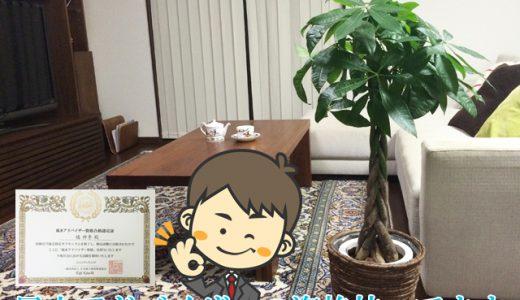 風水アドバイザーがご提案!観葉植物パキラを使った運気アップ風水術