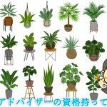 最強の風水観葉植物10選【風水アドバイザーが選ぶとこうなった】