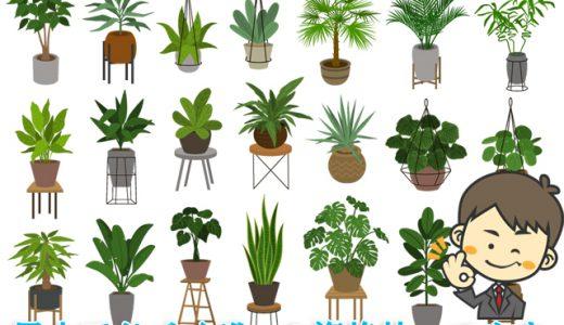 風水アドバイザーが選ぶとこうなった!最強の風水観葉植物10選