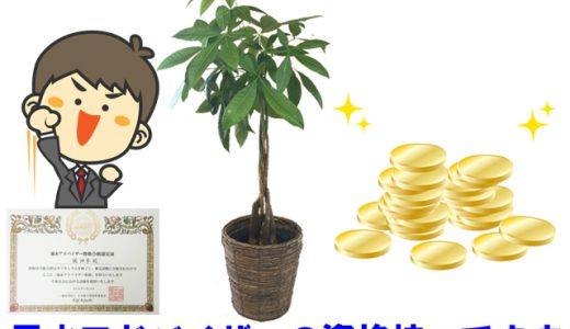 金運アップの観葉植物【最強7選】。風水アドバイザーが選ぶとこうなった!