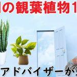 玄関におすすめ観葉植物18選!風水アドバイザーが選ぶとこうなった