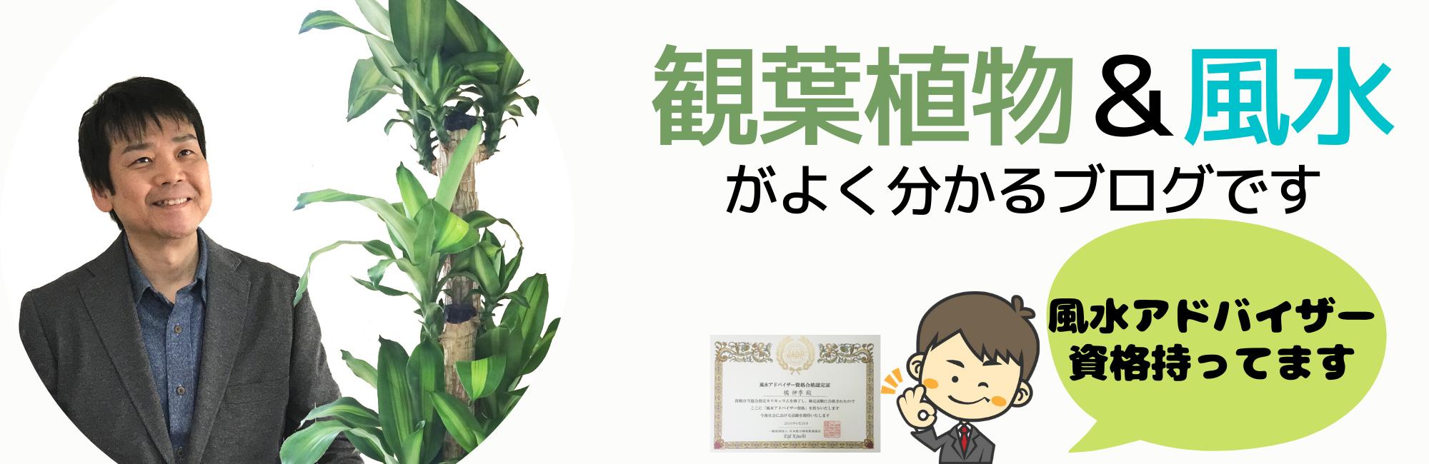 観葉植物と風水のグリーンスマイルBLOG